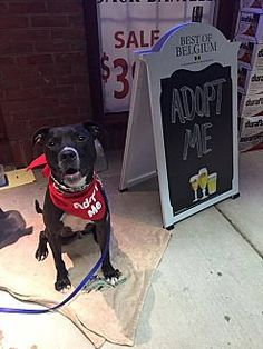 Pictures of Neko a Pit Bull Terrier for adoption in New York, NY who needs a loving home.