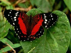 Increibles mariposas!!