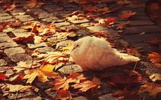 1920x1200 HDQ Images bird