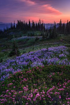 'Pastel Panorama' by Bryan Swan ~ Nisqually Valley, Washington All Nature, Amazing Nature, Beautiful World, Beautiful Places, Beautiful Scenery, Beautiful Flowers, Belle Photo, Pretty Pictures, Beautiful Landscapes