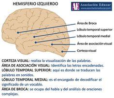 Infografía Neurociencias: Hemisferio Izquierdo. | Asociación Educar