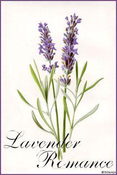 Cottage Charm ~ lavender ~ Lavender Romance ©Willemijn