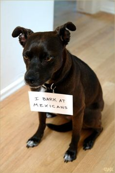 Vincent Mancini's photo: Best dog shame picture yet.