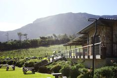 The beautiful vineyards complement this stunning and modern venue #capepoint vineyards