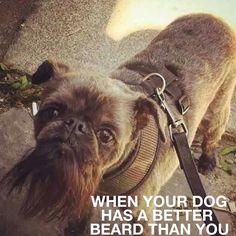When your dog has a better beard than you From beardoholic.com