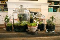 DIY terrariums – this project takes me back. A fabulous modern version of a belo… - All For Garden Terrarium Containers, Succulent Terrarium, Succulent Centerpieces, Diy Mothers Day Gifts, Mother's Day Diy, Indoor Garden, Garden Hose, Plant Design, Air Plants