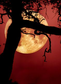 Blood red sky moon