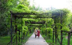 Cişmigiu Garden / Park, Bucharest, Romania