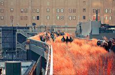 High line park . Urban Landscape, Landscape Design, Garden Design, Green Architecture, Landscape Architecture, Sky Walk, Park In New York, Urban Park, Pedestrian Bridge