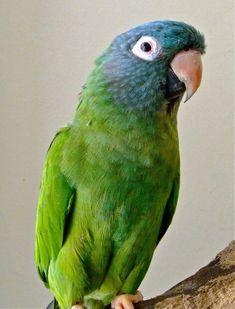 185 Best Bird Spikes images in 2019