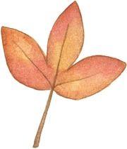 HW Leaf2-712813