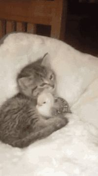 Forbidden love You've reached the ultimate funny animal GIFs Tumblr. Proceed to following.