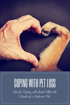 Helpful tips for children, seniors and adults for dealing with grief after a beloved pet dies. Things to consider when making the decision to put your pet to sleep & how to know when you're ready to get another pet after a loss.