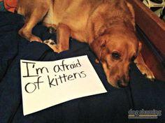 afraid of kittens !