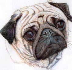 Pug Print by LiboGraphics £6.50