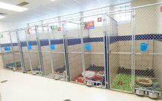 Shelter Is Completely Emptied After The Best Black Friday Sale You'll Ever Find - dog kennel boarding Puppy Care, Pet Care, Dog Kennel Designs, Kennel Ideas, Cage, Best Black Friday Sales, Shelter Design, Dog Hotel, Refuge