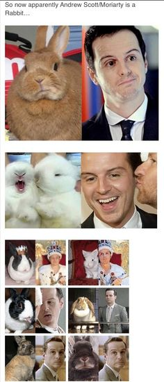We have Sherlotter, Jawn the hedgehog, Anderson the velocerapter, and Moriarty the bunny......HOW IS HE A BUNNY XD<--Also Mycroft the Ostrich. ---This is our fandom...