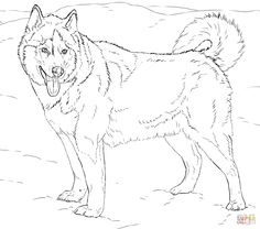 Siberian Husky Coloring Pages | Coloring Pages | Pinterest ...
