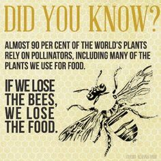 Save the bees and save the planet! My Honey, Honey Bees, Golden Honey, I Love Bees, Bee Art, Bee Happy, Save The Bees, Busy Bee, Bees Knees