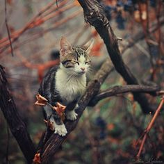 """* * """" Me musts need spex - me can't seez dat squirrel clearly."""""""