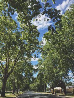 Beautiful trees - Albury, NSW - Australia