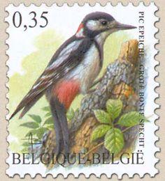 belgian stamps Birds 'Grote bonte specht'
