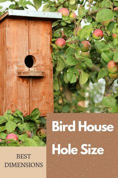 Learn the optimum ENTRANCE HOLE SIZE, entrance height, and mounting height for various birds. Large Bird Houses, Bird Houses Painted, Bird Houses Diy, Dyi Bird House, Bird House Plans, Diy Projects For Beginners, Cool Diy Projects, Bird Feeder Plans, Backyard Projects