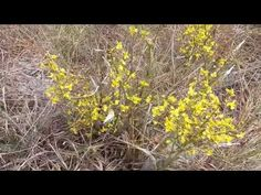 Youtube, Nature, Mop Sauce, Vegetable Garden, Tejido, Log Projects, Craft, Plants, Places