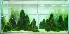 Interior Design, Japanese Aquascaping: awesome aquascape designs aquarium ideas inspiration