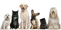 Discover Your Pet's Personality and Star Sign!