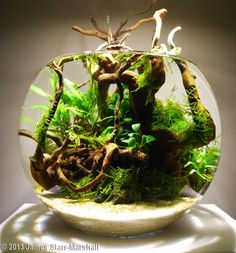 "2013 AGA Aquascaping Contest - Entry #76 ""Woodland Orb"" 3 Gallon bowl"
