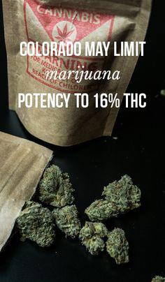 Colorado may limit marijuana potency to 16% THC | massroots.com | Medical Marijuana Quality Matters | Repined By 5280mosli.com | Organic Cannabis College | Top Shelf Marijuana | High Quality Shatter | #OrganicCannabis