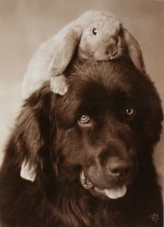Dog & Bunny by Rachael Hale