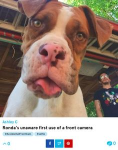 11 Hilarious Accidental Selfies Only A Dog Could Take