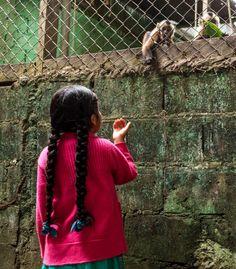 Macaco preso em zoo demonstra sua angústia ao estender a mão para