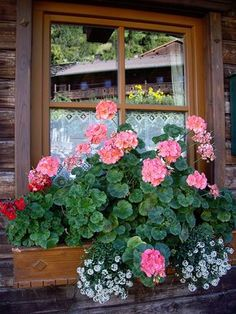 Reflection Behind a Window Box by Nina | by alpenglowtravelers