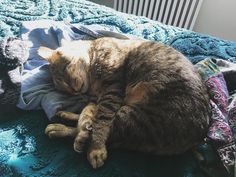 Apartment Story: Finding My Cat Soulmate http://ift.tt/2k4Mhtp   I have been wanting a pet for almost two years now but I always thought I was a dog person since I have never had a cat before. However cats are best for the working girl lifestyle so I had to weigh my options.  I have had mixed experiences with cats  in part because their body language is much different than that of dogs; I think some negative experiences may have been a product of miscommunication. Lately I have been meeting…