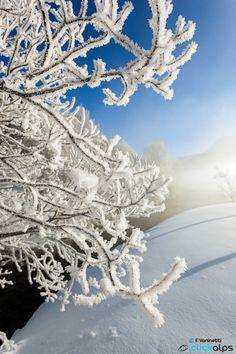 Frozen by Francesco Vaninetti on 500px
