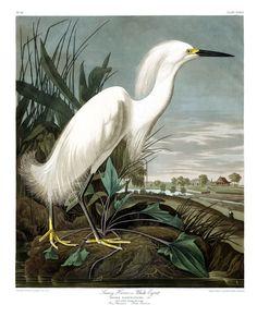 John James Audubon Snowy Egret