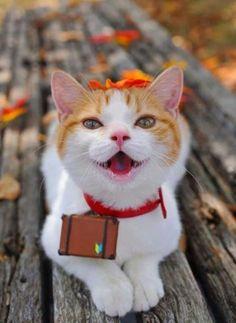 Blije poes.......Happy cat