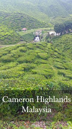 Visit the Tea Plantations in Cameron Highlands Malaysia