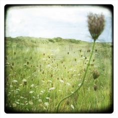 Lessay Landscapee Photography  Fine Art Print  Nature  by labokoff