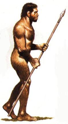 28.Homo erectus. Vivió entre 1,9 millones de años y 70 000 años y habitaron en Asia y África.Características: bóveda craneal, baja y angular, una frente audiza. Su volumen craneal fue muy variableentre 850cm3 y 1100cm3, dientes pequeños, mandíbula sin mentón, medía 1,80 cm. Pero lo mas importante fue que dominaba el fuego y aprendió a espantar a las fieras con él.