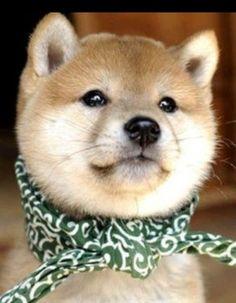 キュートな犬