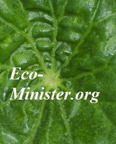 Eco-ministry with ordinations to Eco-Minister and a budding eco-chaplaincy program will be on the agenda in presentations and panel discussions.