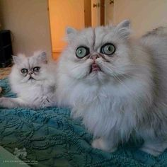 Wholly CRAP them kittehs are scary looking! Cats of Instagram   Daily doses of original, cute, cat photos