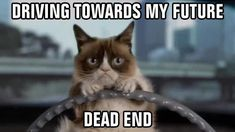 Grumpy cat ~ Driving towards my future dead end