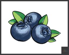 digital Vector hand drawn fresh Blueberry 7243f233f986e