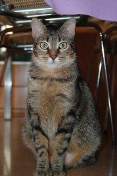 KAROLA - Gato en adopción - AsoKa el Grande