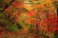 autumn in korea  한국의 가을 천마산